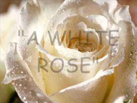 A white rose love poem youtube a white rose love poem mightylinksfo
