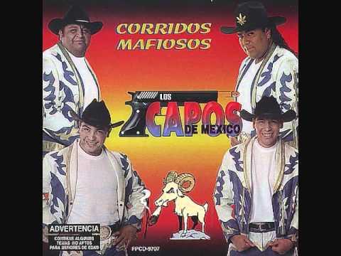 Los Capos de México  El Buey!!!!!!!!!!!!!!