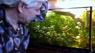 Aquarium. Обслуживание аквариума, прополка.(Обслуживание растительного аквариума., 2016-10-23T19:25:26.000Z)