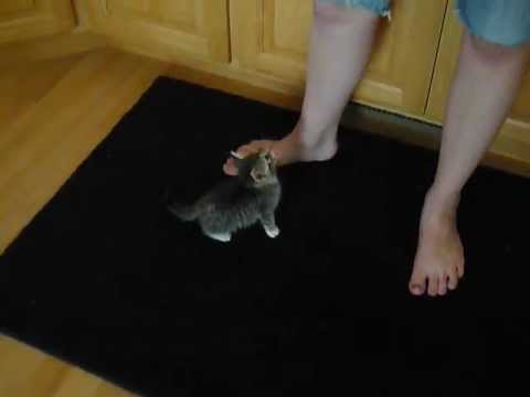 Hungry Kitten Wants Food
