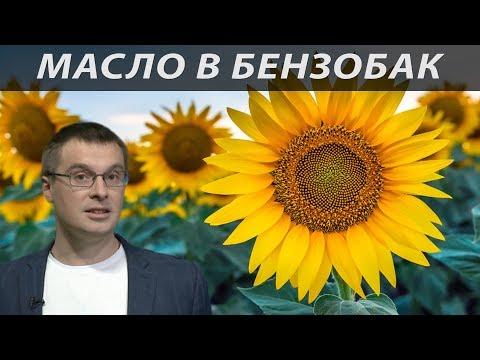 Русское масло - новая нефть