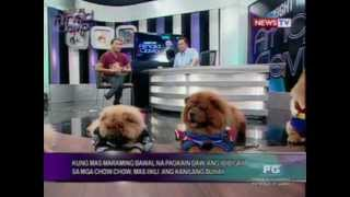 Twac: Who Let The Dogs Out?