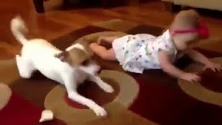 Крутые приколы с животными угар 2018 года смешные собаки,кошки,попугаи