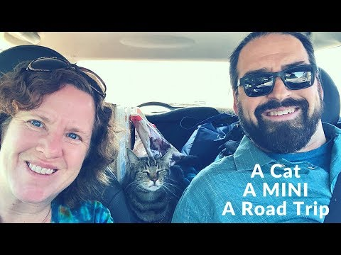 A Cat, a MINI and a Road Trip  The Last Bus Stop in Austin and Return to the Boat