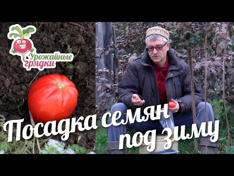 Посадка семян под зиму #urozhainye_gryadki