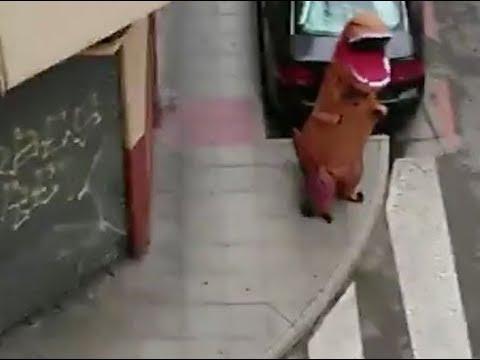 Man tries to escape coronavirus quarantine by dressing in T-Rex costume