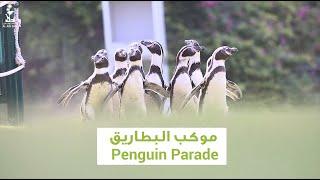 Penguin Parade | موكب البطاريق