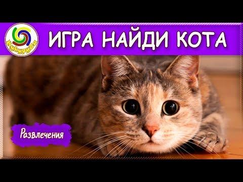 Игра Найди кота! 🔎 Развлечения