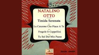 Timida Serenata (Calypso)
