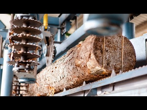 Wood-Mizer TITAN Industrial Sawmill Line in Action in South Africa