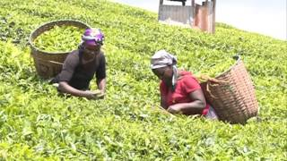 Tea earns Kenya 140b