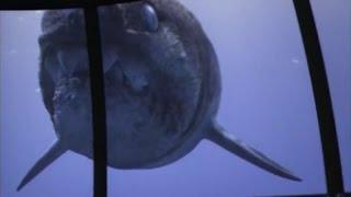 Приключения с морскими чудовищами Часть 2(Приключения с морскими чудовищами: Создатели нового проекта решили отправить человека в далёкое прошлое..., 2015-09-08T19:44:41.000Z)