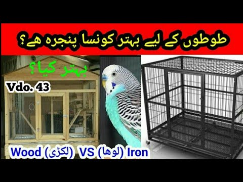 Australian Parrots: Wood (Lakri) Cage VS Iron (Lohy) Cage in Urdu / Hindi by |Arham|., Video. 43 thumbnail