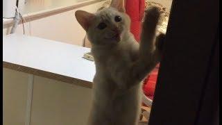 大切なものを失い、悲しみに泣く可哀想な子猫 Kitten crying sadly thumbnail