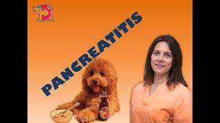 La en perros se trata pancreatitis como