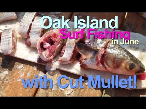 Surf Fishing With Cut Mullet In June On Oak Island