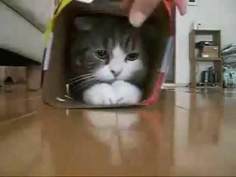 Коты в коробках ютуб