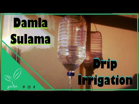 Watering with infusion set/ Serum seti ile damla sulama