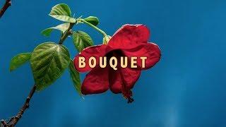 Telltale - Bouquet (Official Music Visualizer)