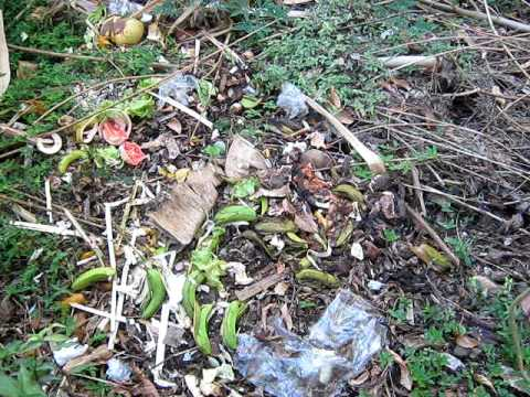 Backyard dumping of Garden waste in Grenada