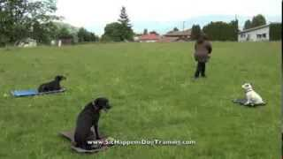 Doberman Hope Sit Happens Dog Training Puppy Of The Month