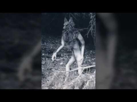 Dogman Song Parody - The Legend of the Michigan Dogman (Part 2)
