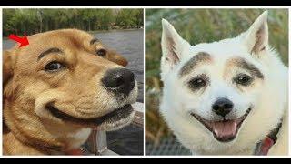Thánh Lồng Tiếng | Vì Sao Chó Có Lông