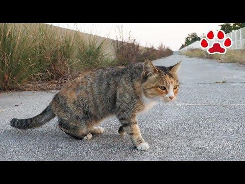2018 11 11 野良猫達【瀬戸の野良日記】 Stray cat and kitten