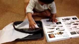 takeruはお魚が大好き❤ 1際3ヶ月で初めて水族館に行って以来、どこに行...