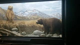 More animals at the Natural History Museum!