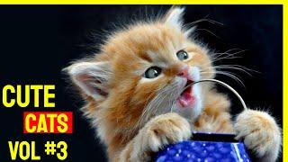 Cute Cat Videos 2021 Vol #3 | Funny Cat Videos 2021 | Cute Cats