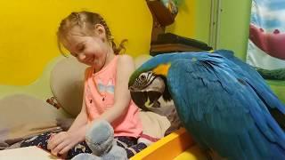 Попугай ара и ребенок играют с мозаикой