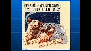 Первые космические путешественники#Как собаки летали в космос?