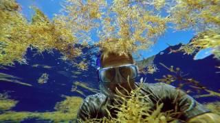 The Smog Of The Sea Trailer
