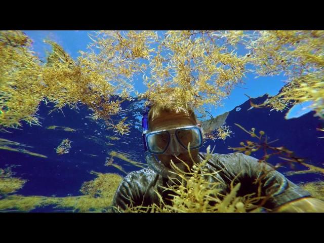 The Smog of the Sea - Trailer