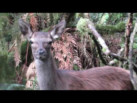 Pureoras Early ROAR Hunt 2017
