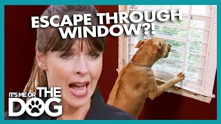 Dog Tries To Jump Out Top Floor Window | It's Me Or The Dog
