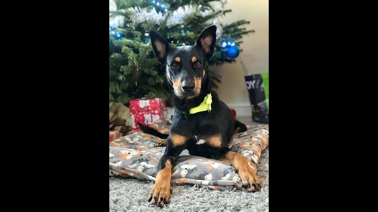 Heidi - Spanish Rescue Dog - 4 Weeks Residential Dog Training
