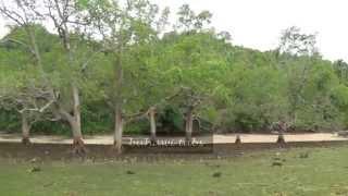 BALIGUIAN, ZAMBOANGA DEL NORTE( NARRA  & TUNGKALING)