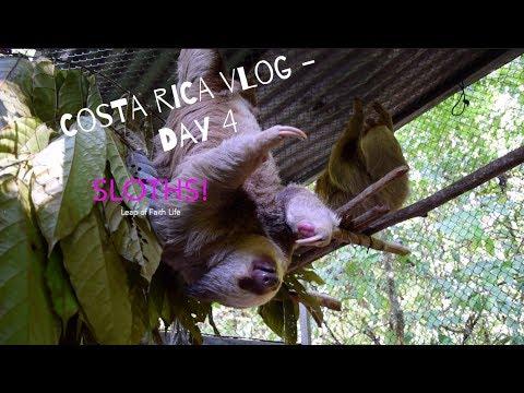 Costa Rica Yoga Retreat Vlog | Day 4 - SLOTHS!