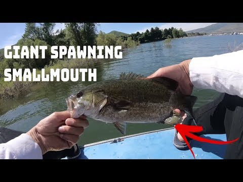 Pineview Reservoir Fishing: Smallmouth Bass Fishing Tricks And Tips