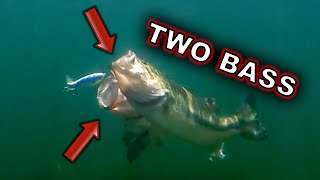Best Baits for Post Spawn Fish **UNDERWATER FOOTAGE**