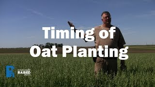 When to Plant Oats in Iowa