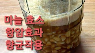 마늘 효소&혈액순환&따뜻한 성질을 가진 마늘