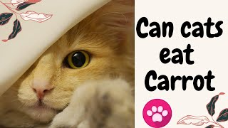 Can Cats eat Carrots | Benefits and risks of feeding carrots to your Cat.