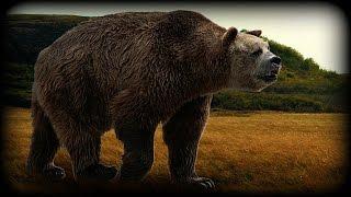 Short-Faced Bear - Documentary