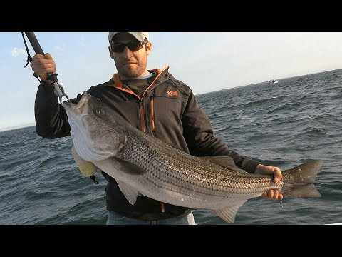 """Big Stripers in """"The Race"""" - Long Island Sound"""