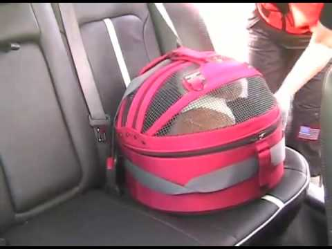 Pet Safety Lady From Bark Buckle UP Shows How To Secure The Car Seat Called Sleepy Pod