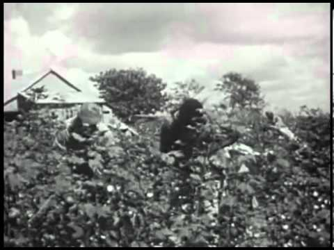 The Plantation System in Southern Life_ Plantation Economy in the United States (1950)