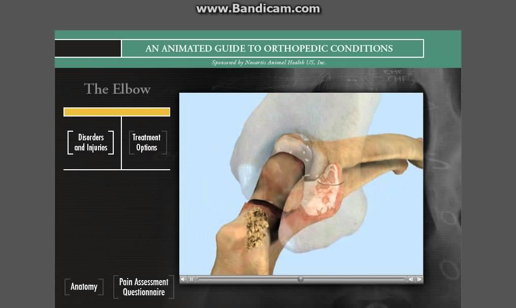 el codo, perro,gato, elbow dog, cat, ortopedia, orthopedic - YouTube